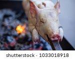 suckling pig roast at a... | Shutterstock . vector #1033018918