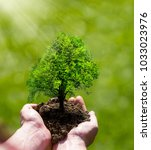 small tree in the woman hands ... | Shutterstock . vector #1033023976