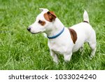 adorable dog with anti mite and ... | Shutterstock . vector #1033024240