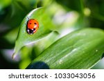 Coccinellidae Is A Widespread...