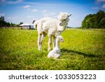 portrait of a newborn cute baby ... | Shutterstock . vector #1033053223