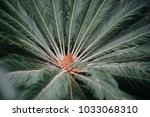 green leaves of tropical plants ...   Shutterstock . vector #1033068310