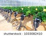 chiangmai  thailand   february... | Shutterstock . vector #1033082410