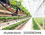 chiangmai  thailand   february...   Shutterstock . vector #1033082446