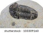 Trilobite fossil - stock photo