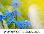 beautiful closeup blue snowdrop ... | Shutterstock . vector #1033096573