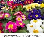 flowers in spring   Shutterstock . vector #1033147468