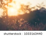 morning sunrise with flower and ... | Shutterstock . vector #1033163440