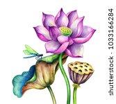 watercolor botanical...   Shutterstock . vector #1033166284