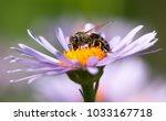 detail of bee or honeybee in... | Shutterstock . vector #1033167718