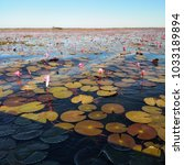 pink water lilies around with... | Shutterstock . vector #1033189894