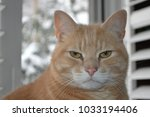 large tabby cat face looking... | Shutterstock . vector #1033194406