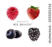 blackberry watercolor ... | Shutterstock . vector #1033201216