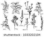 illustration of medical herbs... | Shutterstock . vector #1033202104