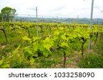 tuscan vineyard farm with... | Shutterstock . vector #1033258090