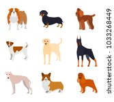 Stock vector cartoon breed of dogs collection icons include of doberman bulldog labrador or retriever poodle 1033268449