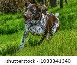 german shorthaired pointer ... | Shutterstock . vector #1033341340