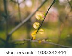 Small photo of Alder bloomed in spring forest. Copy space.Spring beginning. nature in March, april . Toned image