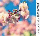 spring blossom background.... | Shutterstock . vector #1033347289