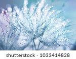 dandelion seeds in the drops of ... | Shutterstock . vector #1033414828