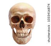 Human Skull  Isolated On White...