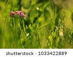 summer background flowers... | Shutterstock . vector #1033422889