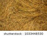 Golden Hay Texture Closeup