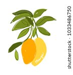 mango  sketch for your design | Shutterstock .eps vector #1033486750