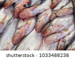 Small photo of Fresh fish in the Mekong River sold in the market,Sheatfish (Siluridae)