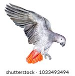 flying parrot jaco on a white...   Shutterstock . vector #1033493494