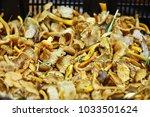 forest mushrooms on the market | Shutterstock . vector #1033501624