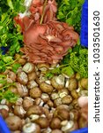 forest mushrooms on the market | Shutterstock . vector #1033501630