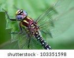 A Dragonfly  Aeshna Viridis ...