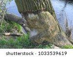 close up of tree trunk bitten... | Shutterstock . vector #1033539619