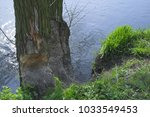 river bank with trees bitten by ... | Shutterstock . vector #1033549453