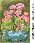 watercolor herbal tea. bergenia ...   Shutterstock . vector #1033550578