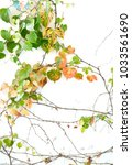 Stock photo ivy leaves isolated on white 1033561690