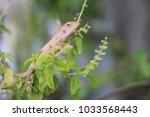 lizard.  dodge on the holy... | Shutterstock . vector #1033568443