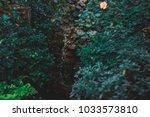 botanical garden in st.... | Shutterstock . vector #1033573810