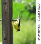 american goldfinch bird hangs...   Shutterstock . vector #1033654630