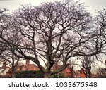 Small photo of All encompassing Tree spanning a Park
