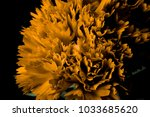 yellow carnation flower... | Shutterstock . vector #1033685620