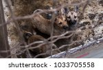 three small dogs in a cage | Shutterstock . vector #1033705558