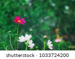 colorful bright wildflowers ... | Shutterstock . vector #1033724200