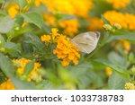 beautiful yellow colorful... | Shutterstock . vector #1033738783