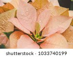 yellow plant leaf with drops of ... | Shutterstock . vector #1033740199