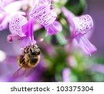 Macro Of A African Honey Bee...