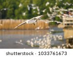 seagull flying above the sea... | Shutterstock . vector #1033761673