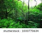 beautiful landscape  park | Shutterstock . vector #1033770634