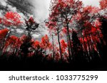 canopy of red trees in black... | Shutterstock . vector #1033775299
